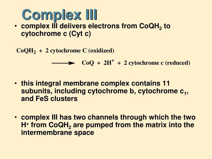Complex III
