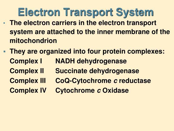 Electron Transport System