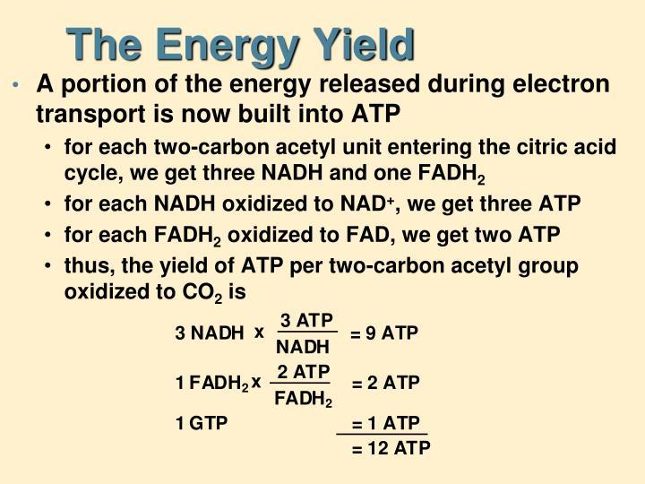 The Energy Yield