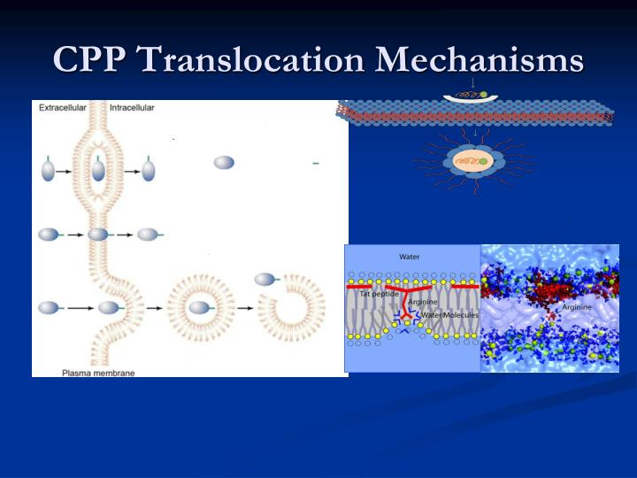 CPP Translocation Mechanisms