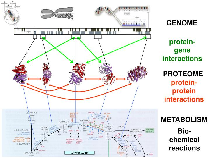 Bio-Map