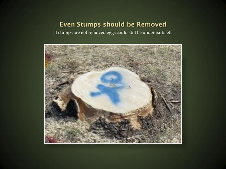 Even Stumps should be Removed