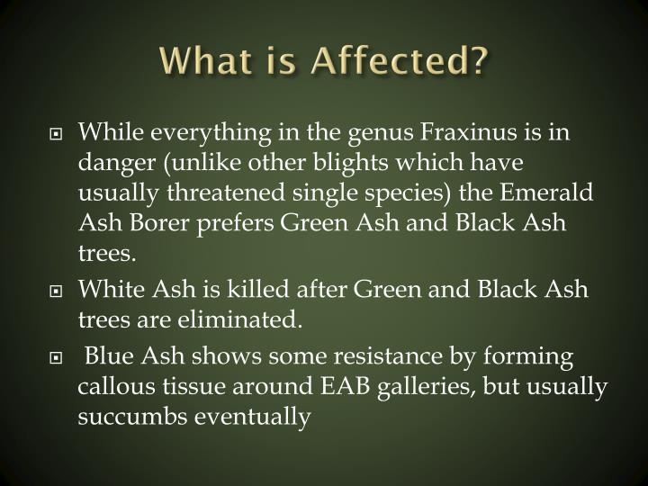 What is Affected?