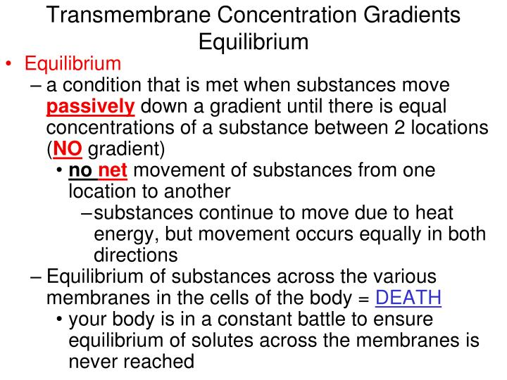 Transmembrane Concentration Gradients Equilibrium
