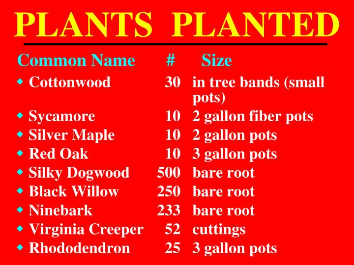 PLANTS  PLANTED