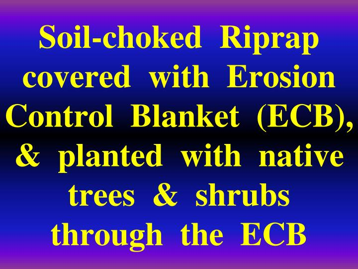 Soil-choked  Riprap  covered  with  Erosion  Control  Blanket  (ECB),  &  planted  with  native  trees  &  shrubs   through  the  ECB