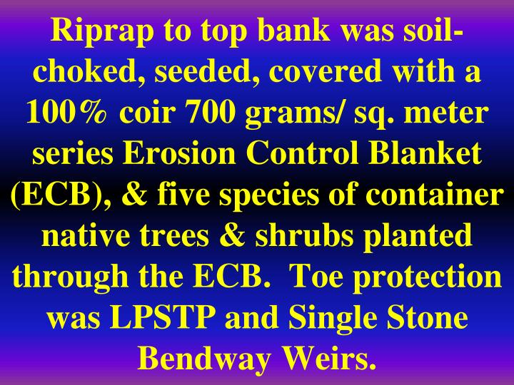 Riprap to top bank was soil-choked, seeded, covered with a 100% coir 700 grams/ sq. meter series Erosion Control Blanket (ECB), & five species of container native trees & shrubs planted through the ECB.  Toe protection was LPSTP and Single Stone Bendway Weirs.