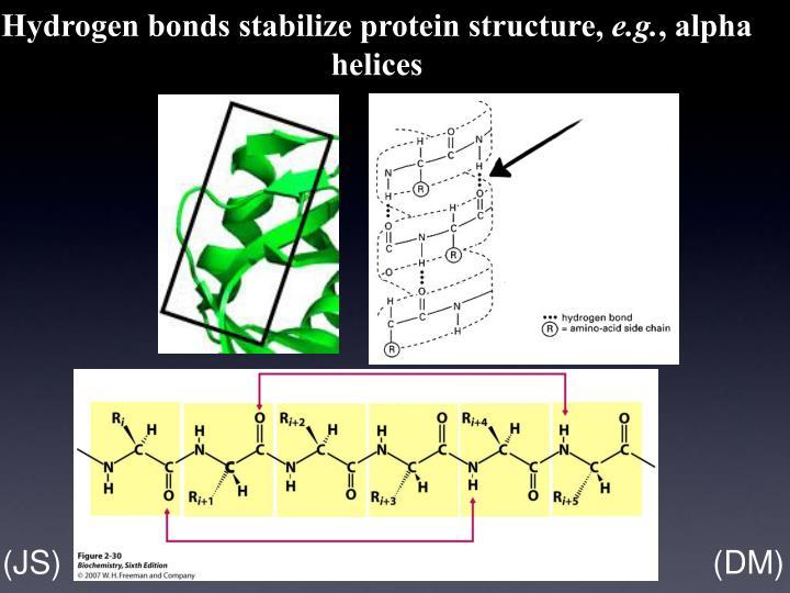 Hydrogen bonds stabilize protein structure,