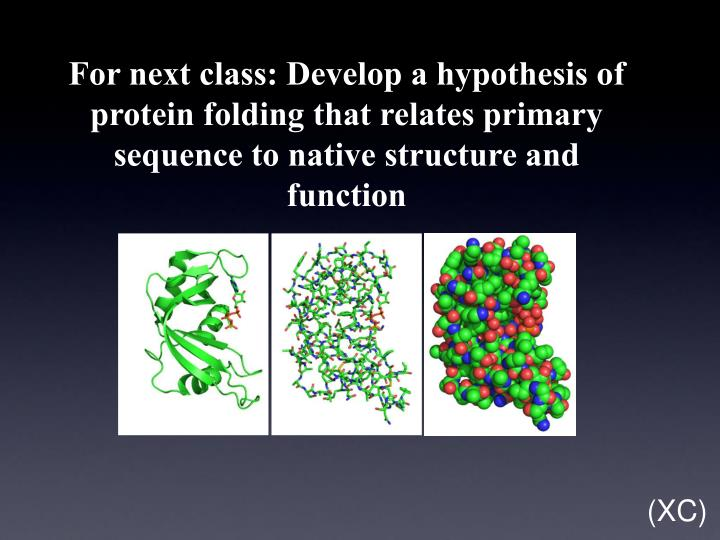 For next class: Develop a hypothesis of protein folding that relates primary sequence to native structure and function