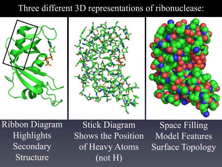 Three different 3D representations of ribonuclease: