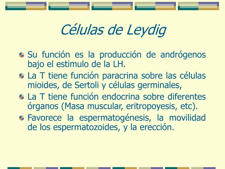 Células de Leydig