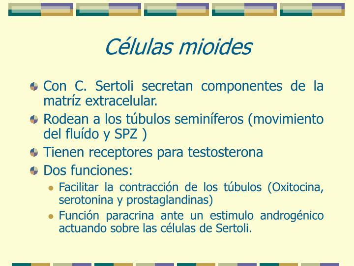 Células mioides