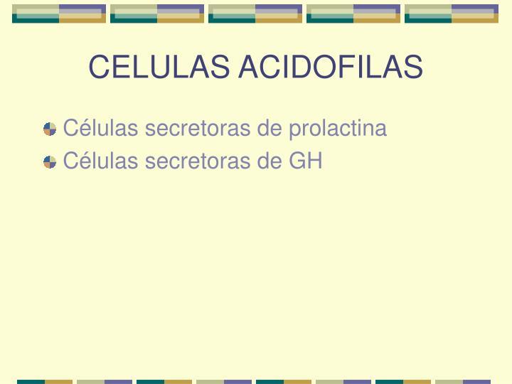 CELULAS ACIDOFILAS