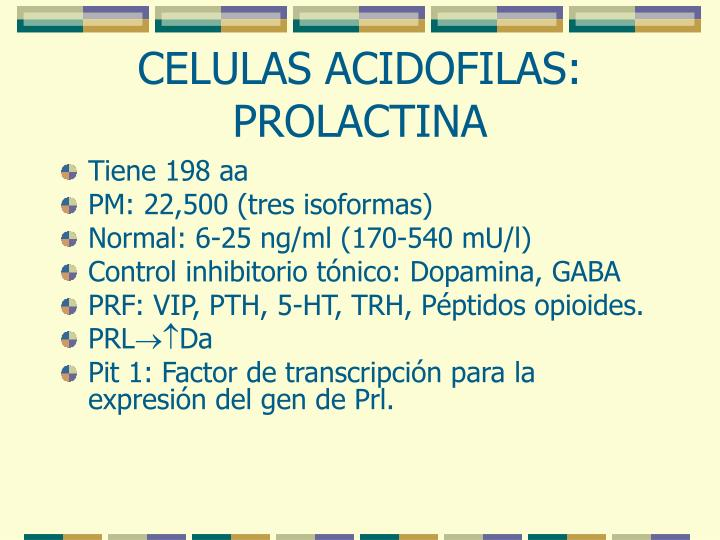 CELULAS ACIDOFILAS: PROLACTINA