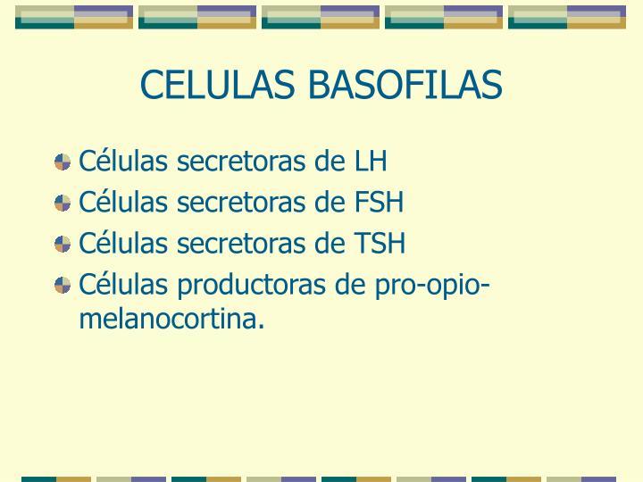 CELULAS BASOFILAS