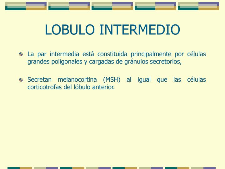 LOBULO INTERMEDIO