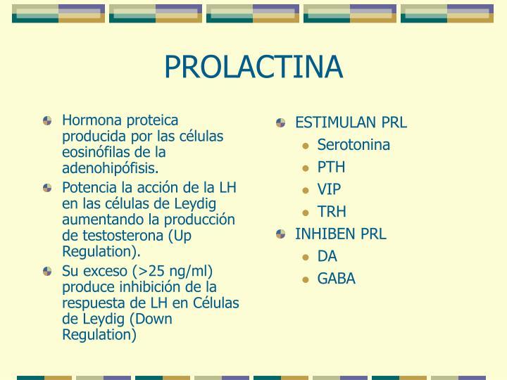 Hormona proteica producida por las células eosinófilas de la adenohipófisis.