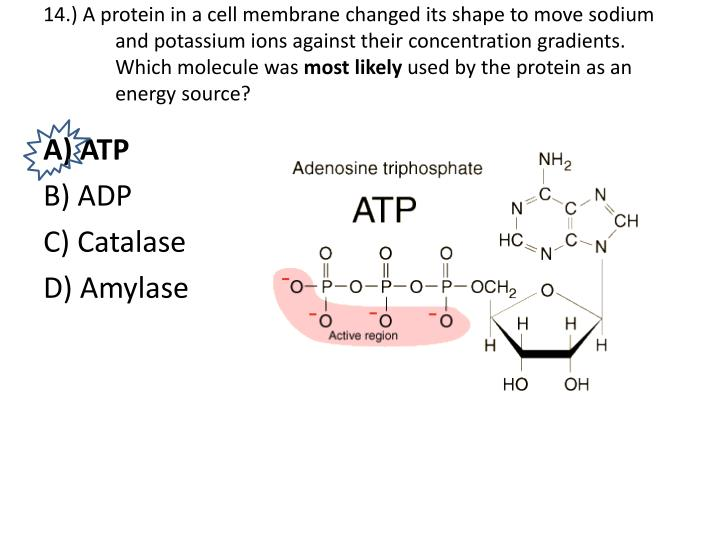 PPT - Biology Keystone Exam Review Packet PowerPoint ...