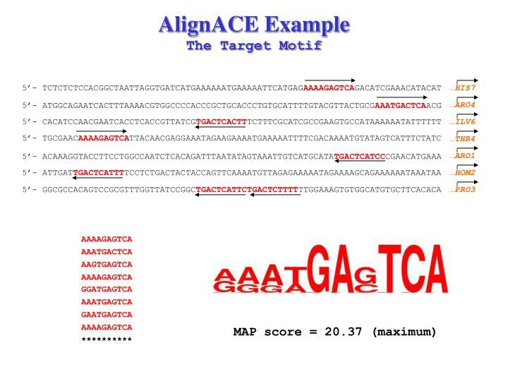 AlignACE Example