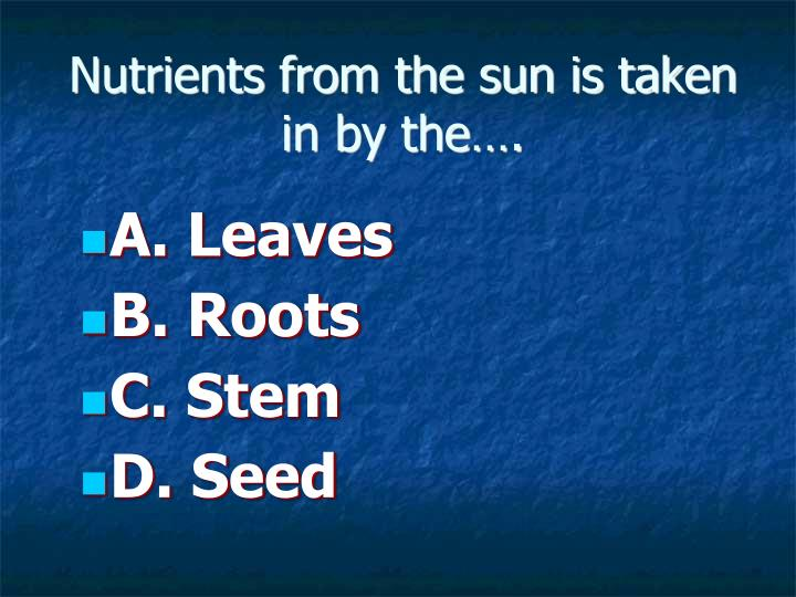 Nutrients from the sun is taken in by the….