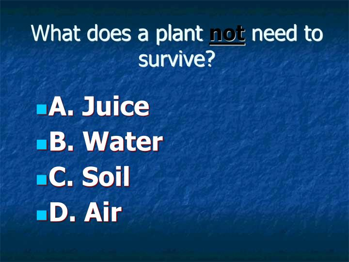 What does a plant