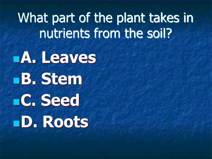 What part of the plant takes in nutrients from the soil?