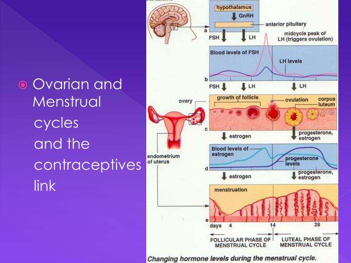 Ovarian and