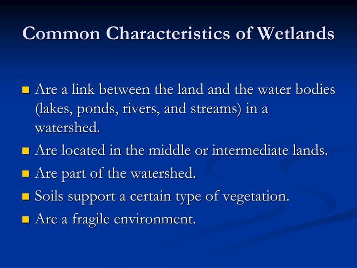 Common Characteristics of Wetlands