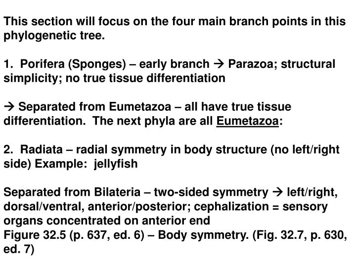 This section will focus on the four main branch points in this phylogenetic tree.