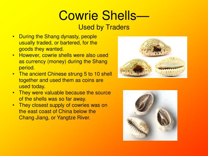 Cowrie Shells—