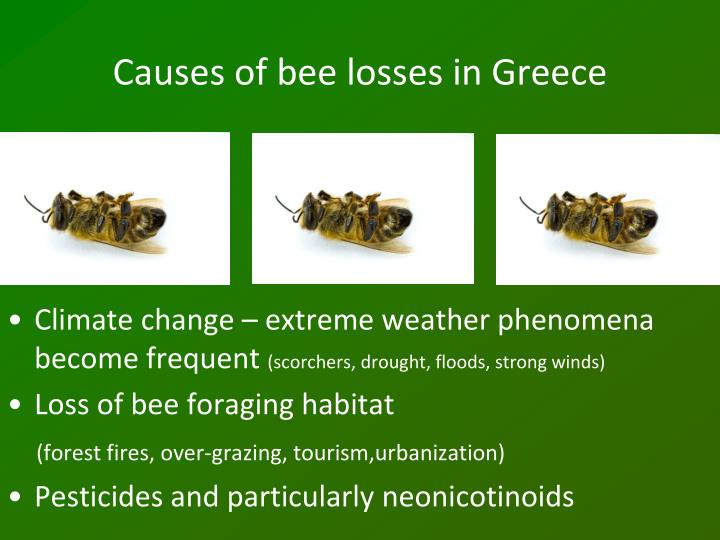 Causes of bee losses in Greece