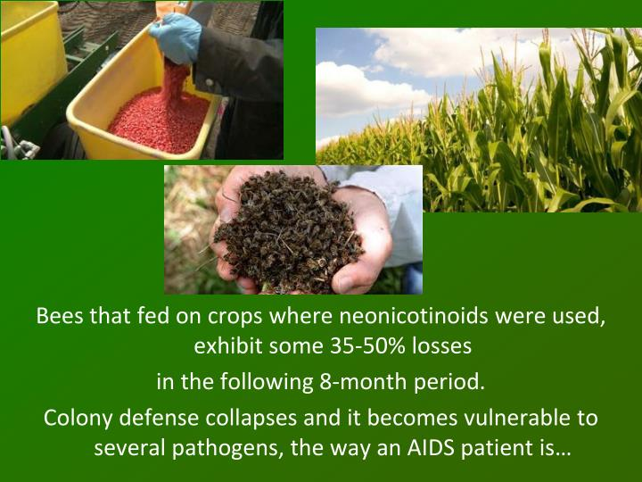 Bees that fed on crops where neonicotinoids were used,