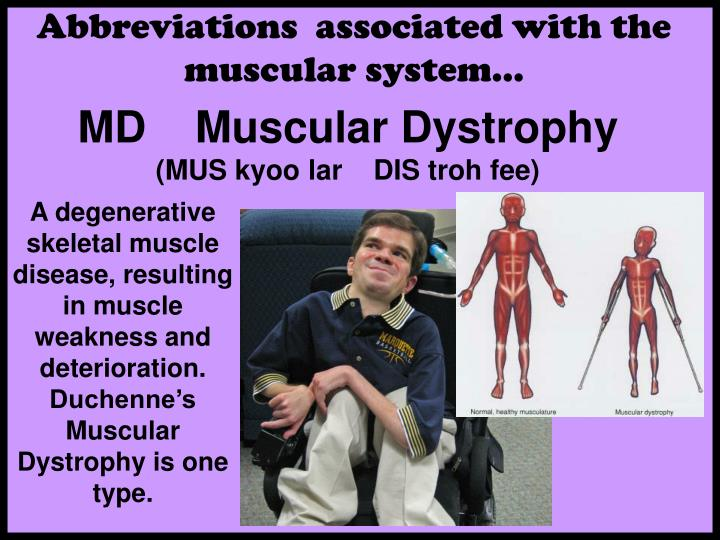 Abbreviations  associated with the  muscular system…