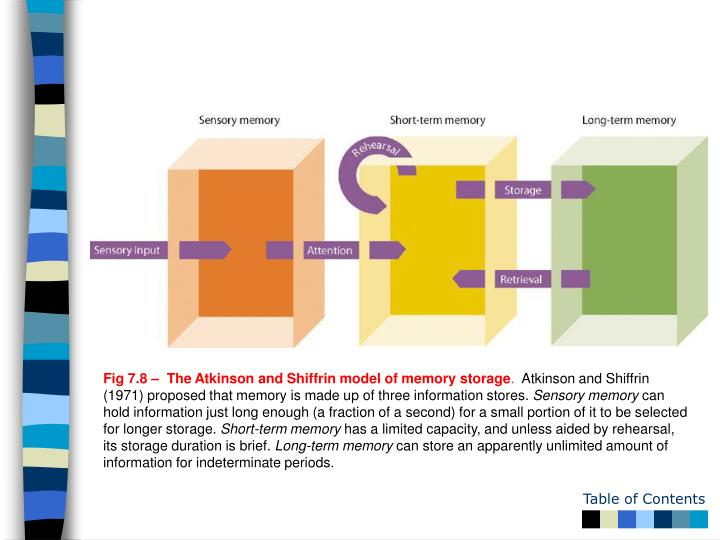 Fig 7.8 –  The Atkinson and Shiffrin model of memory storage