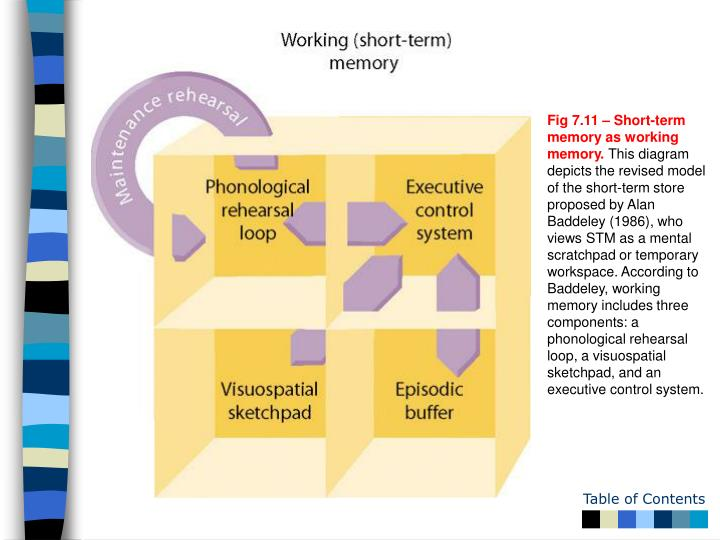 Fig 7.11 – Short-term memory as working memory.
