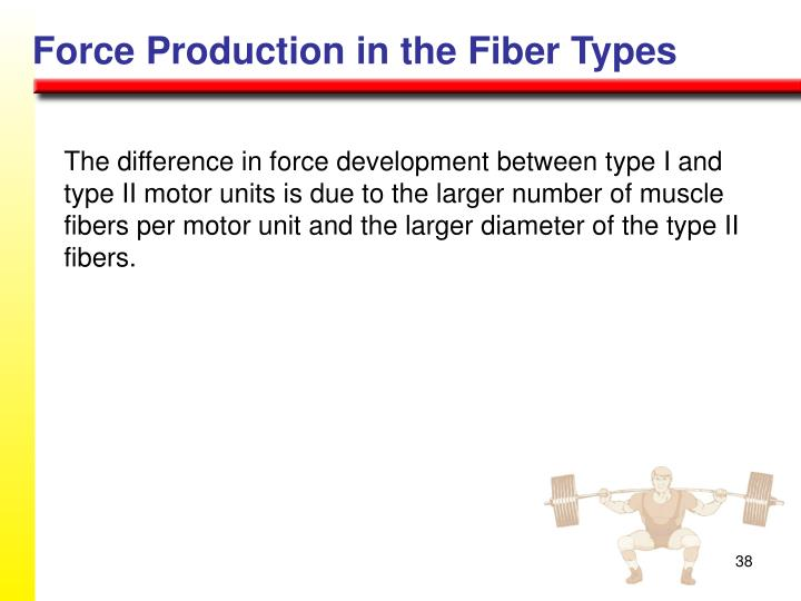 Force Production in the Fiber Types