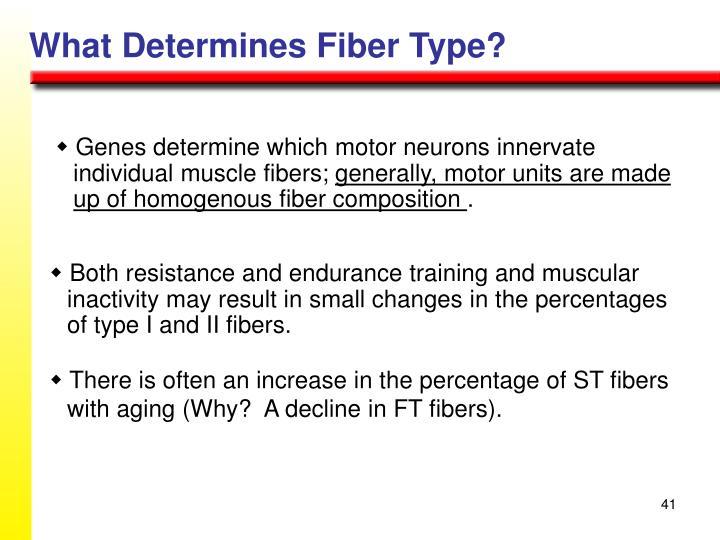 What Determines Fiber Type?