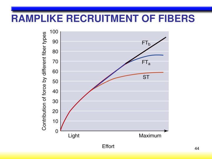 RAMPLIKE RECRUITMENT OF FIBERS