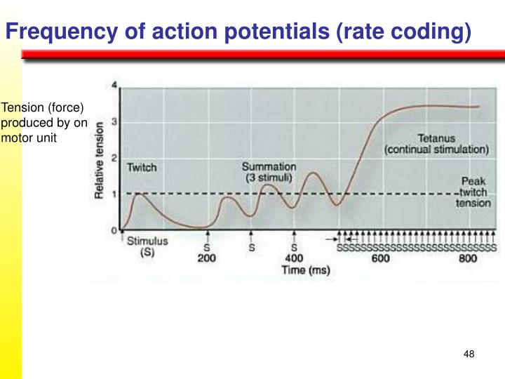 Frequency of action potentials (rate coding)