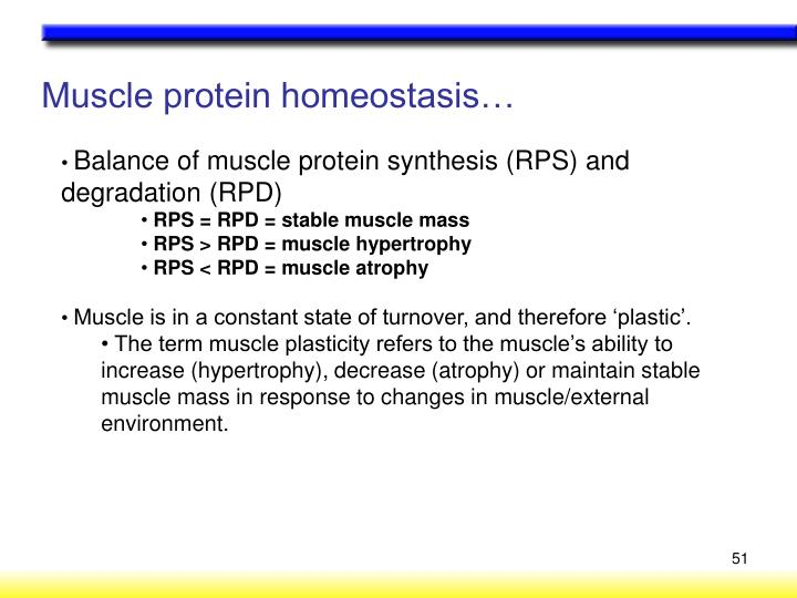 Muscle protein homeostasis…