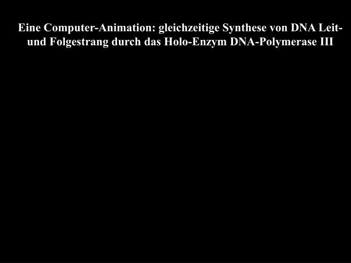 Eine Computer-Animation: gleichzeitige Synthese von DNA Leit- und Folgestrang durch das Holo-Enzym DNA-Polymerase III