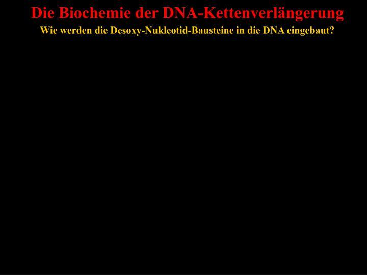 Die Biochemie der DNA-Kettenverlängerung