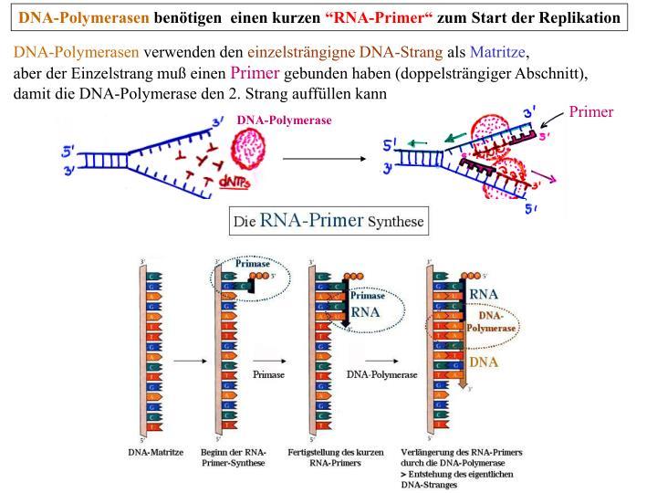 DNA-Polymerasen