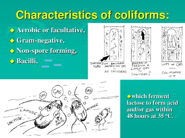 Characteristics of coliforms: