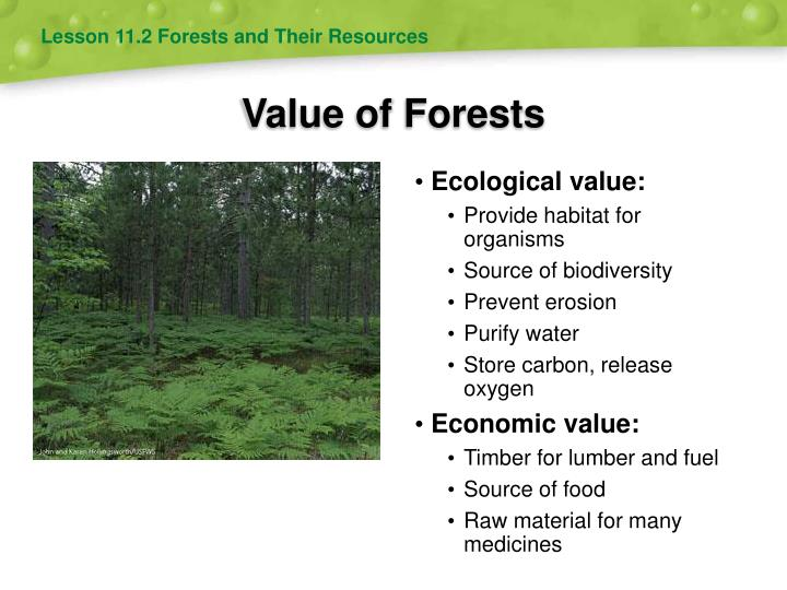 Value of Forests