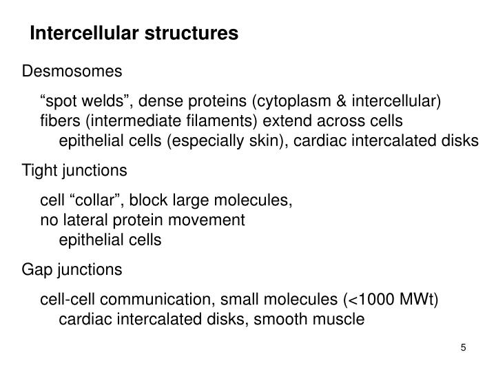 Intercellular structures