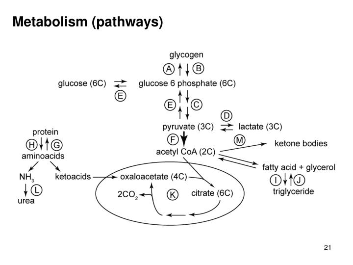 Metabolism (pathways)