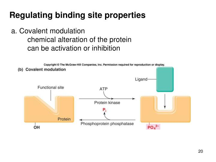 Regulating binding site properties