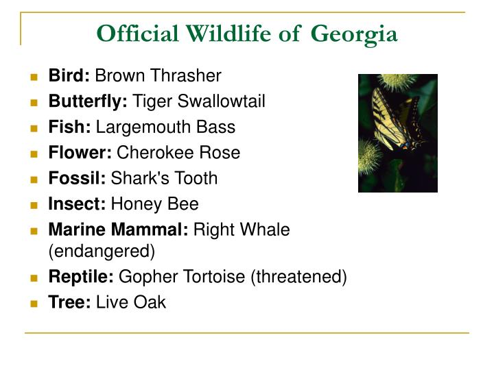 Official Wildlife of Georgia