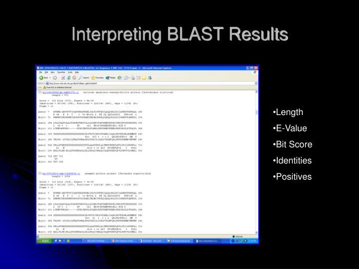 Interpreting BLAST Results